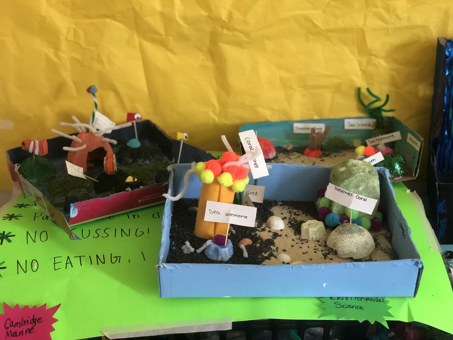 Some representations of what students believe a coral reef looks like